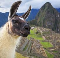 【早鳥雙重優惠、升等兩晚五星】印加古文明秘魯、天空之城馬丘比丘、納斯卡線飛行12日(含稅)