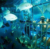 進擊的巴里島-網紅鞦韆+鳥巢、海底摩托車+監獄+漫步五日遊