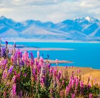 紐西蘭璀璨螢火蟲、東加里洛國家公園、羅吐魯阿陶波雙美湖-清新美境7天