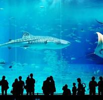 【沖繩GO好玩】絕景古宇利島、超人氣水族館、海豚秀、OUTLET好好買、北谷町海濱下午茶4日