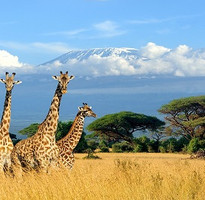 肯亞動物奇觀~甜水動物保護區、阿布岱爾國家公園、奈瓦夏湖、地獄門國家公園、馬賽馬拉動物獵遊10日