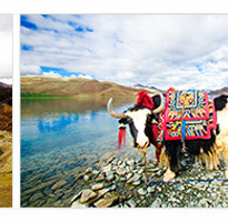 《西藏經典》林芝魯朗林海.拉薩布達拉宮.日喀則.納木錯8日●