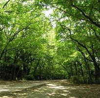 關西心發現5天~京都森呼吸.美山合掌村.嵯峨野火車.阿倍野