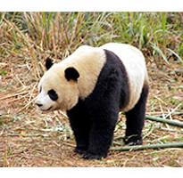 《旅展優惠》四姑娘山.峨嵋山.熊貓基地.成都8日(無購物站)