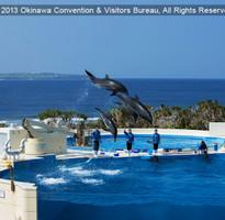 ㊙老闆不在家㊙【沖繩漁市鮮彩樂購】玻璃村、泡盛酒廠、OUTLET、海洋博水族館4日