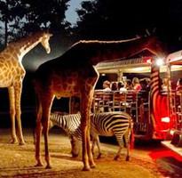 《小城故事金三角風情》聖獅公園放天燈體驗大象便便紙DIY泰式指壓湄登叢林騎象夜間動物園五日遊
