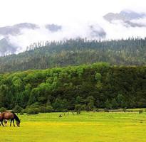 經典小資~西藏林芝、前後藏、二大聖湖、青藏鐵路軟臥10天
