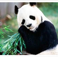 《每月一物》湖北‧探索神農架‧小龍潭‧官門山熊貓‧莫愁湖8日◆無購物站