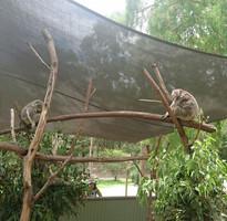 玩樂澳洲 雪梨黃金雙城七日~天堂鄉農莊+無尾熊抱抱、螢火蟲、送雪梨夜景