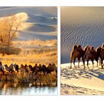 《限量搶購》東疆江布拉克麥田.庫姆塔格沙漠.北疆喀納斯湖.雅丹魔鬼城12日