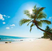 泰@悠閒。叮叮島半日遊蘇梅五日《含稅金 贈小費》(含稅)