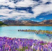 【蜜月典藏】紐西蘭南北島、地熱SPA、冰河峽灣火車、螢火蟲洞10日