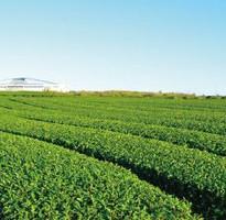 端午連休跟團省♯花遊濟州~噢雪綠茶博物館促銷4日-遠東