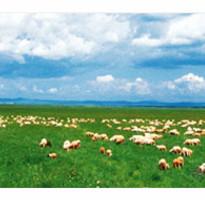 《長榮直飛》呼倫貝爾大草原、大興安嶺、阿爾山、蒙古邊境8日◆無購物、贈俄羅斯歌舞秀