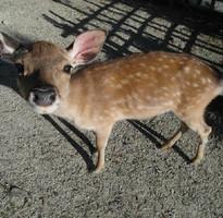 超值促銷【暢GO關西】日本奈良京都神戶大阪自由散策5日