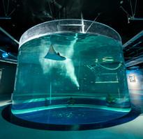 【輕遊關西】日本京都環球小小兵哈利大阪散策5日(台南進出)