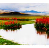 《超值》北疆巴音布魯克、那拉提花海、賽裏木湖、喀納斯、可可托海12天
