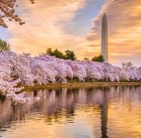 ★花季搶先GO★《櫻花季》國泰雙點進出!美東四城~紐約、費城、華盛頓、巴爾的摩、波多馬克河賞櫻船8日