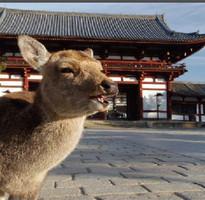 【酷戀關西】和歌山黑潮奈良梅花鹿京都伏見嵐山大阪散策五日